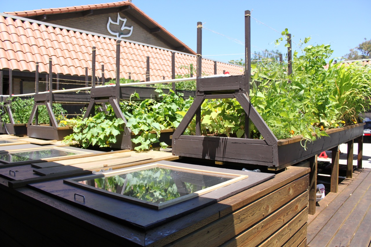 Backyard Nursery System : 11 responses to ? News Feature Aquaponics in Costa Mesa ?